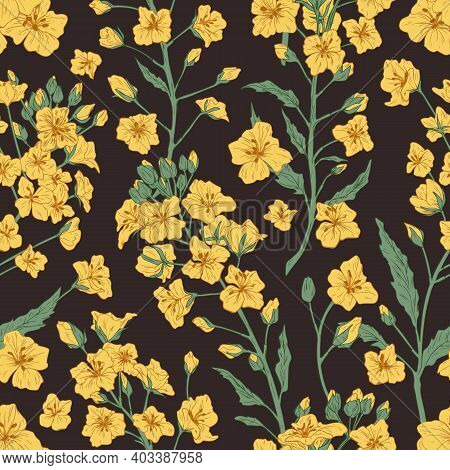 Elegant Seamless Pattern Of Rapeseed Plant Or Yellow Canola Flowers. Botanical Design For Printing.