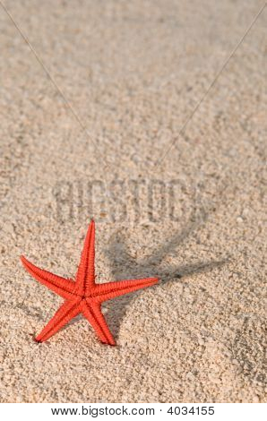 Starfish Casting Long Shadow On Golden Sand
