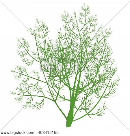 Green Fresh Brunch Of Dill Isolated On White Background Stock Vector Illustration. Flat Style, Color