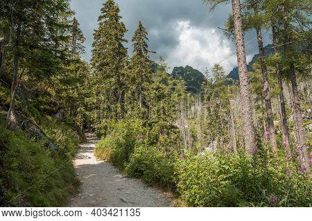 Rocky Hiking Path In Studena Dolina, High Tatras National Park, Slovakia, Europe, Cloudy Sky.