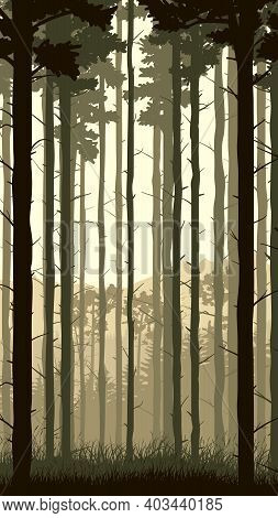 Vertical Illustration With View From Pine Trunks Woods And Grassy Coniferous Forest.