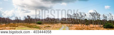 Autumn Panorama Scenery Of Birch Trees In A Wilderness Landscape With A Dirt Road Going Through