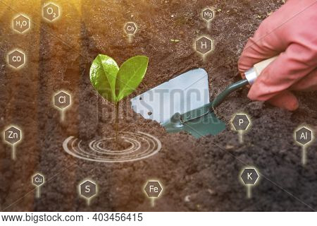 Gardener Grows Plant Seedling. Green Shovel In Hand. Nutrients For Cultivated Plants In Soil. Concep