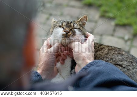 Senior Man Tenderly Caressing Cute Cat, Friendship
