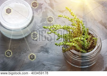 Open Jar Of Face Cream And Green Succulent On Gray Background. Natural Organic Cosmetic Facial With