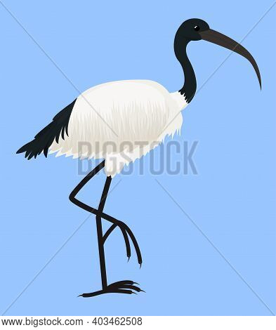 Cartoon Vector Icon Of Ibis Isolated On Blue. Sacred Bird Of Egypt, With Long Legs And Narrow Beak.