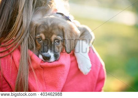 Girl Carrying Dog On Her Shoulder In Park. Concept Of Hugging With Pet.