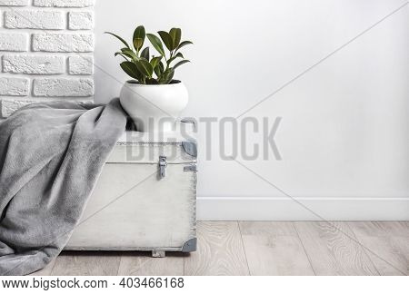 White Wooden Box With Young Rubber Plant In White Flower Pot And Gray Soft Fleece Blanket On It. Whi