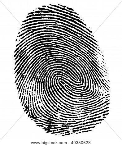 Perfect Thumb Fingerprint