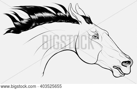 Linear Portrait Of Horse Craned Its Neck Forward, Laid His Ears Back. Head Of A Running Steed With F
