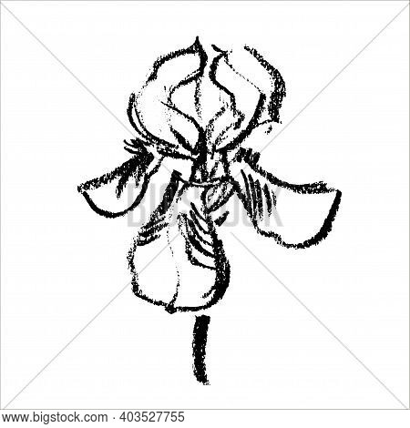 Vector Flower Logo. Floral Background. Calligraphy Coal. Stylized Calligraphic Coal Iris.