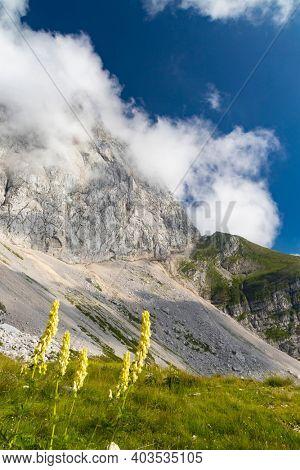 Mountain flora near Mangart, Triglav national park, Julian Alps, Slovenia