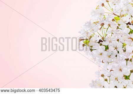 Spring Pink Background Art With Cherry Blooming. Beautiful Nature Dreamy Scene With Blooming Tree. S