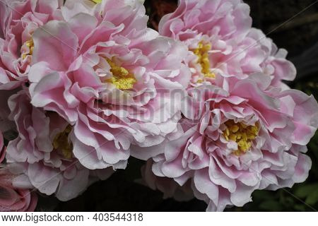 Artificial Flowers Background Lovely Concept, Stock Photo