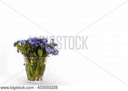 Blue Wildflowers In A Glass Cup Against A White Wall. Forget Me Nots.