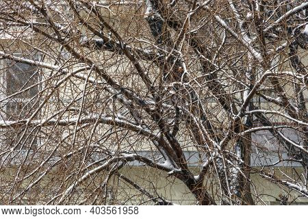 Heavy Snowfall On Tree Branches In Thessaloniki, Greece. Day View Of Snow Falling On Residential Are