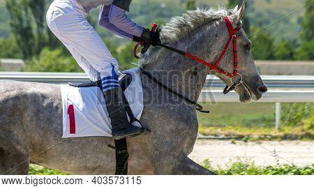 Arabian Horse Run During A Race On Hippodrome.