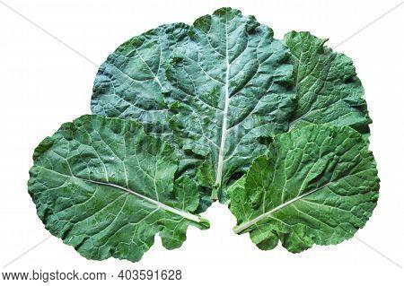 Leaves Of Rastan ( Collard Greens, Collards )   - Popular Leafy Vegetables In Balkan Cuisine. Isolat