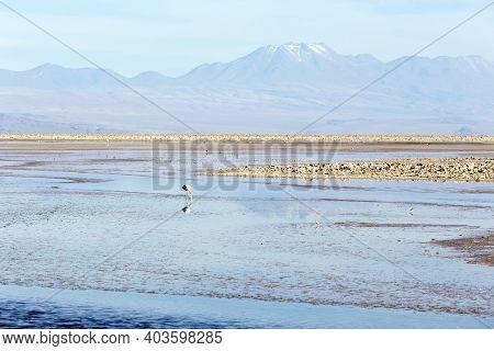 The Beautiful Chaxa Lagoon
