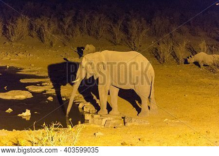 Picture Taken At Night Of An Elephant In Namibia