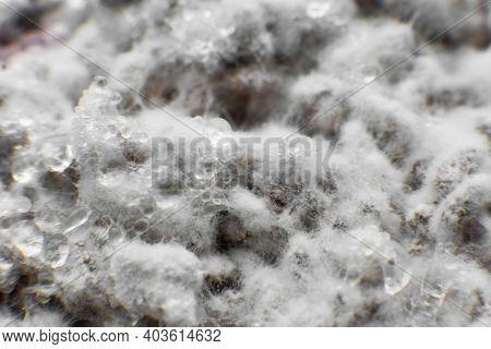 Mushroom Mycelium Close Up. Grain Mycelium. Mushroom Hypha Threads. Growing Mushrooms. Mycelium Text