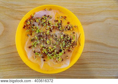 Top Vietop View Of Germinated Seeds For Growing Microgreens In A Yellow Plate On A Wooden Background