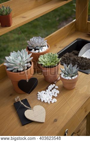 Succulent Plants On Garden Bench