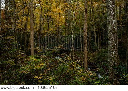 Early Fall In The Forest Of Great Smoky Mountains National Park