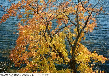 Colorful Autumn Tree Foliage On The Shoreline Of A Freshwater Lake Environment In West Central Minne