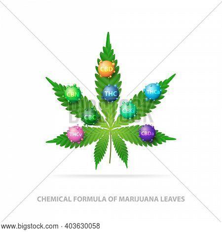 Chemical Formula Of Marijuana Leaves. Green Leaf Of Cannabis With 3d Molecules Of Chemical Formula O