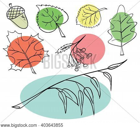 Vector Collection Of Varied Leaves And Plants