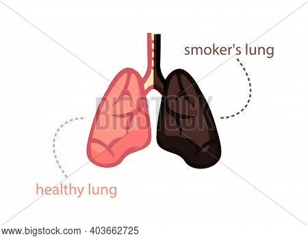 Lungs Smoker And Healthy Person. Wholesome Pink