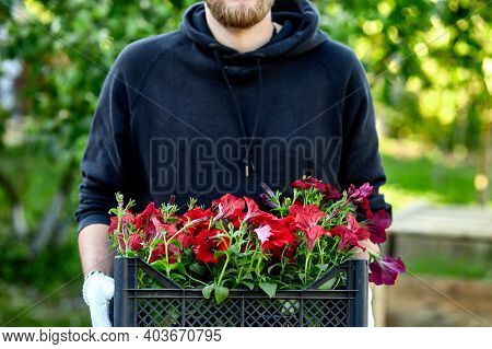 Man Is Shopping Petunia Flowers In Garden Center Carrying Basket.