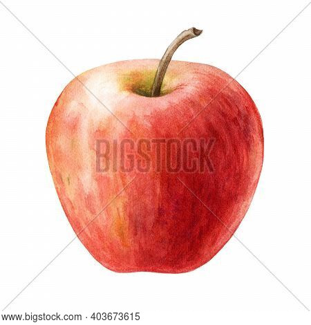 Red Apple Fruit Watercolor Illustration. Realistic Sweet Juicy Organic Food Element. Delicious Singl