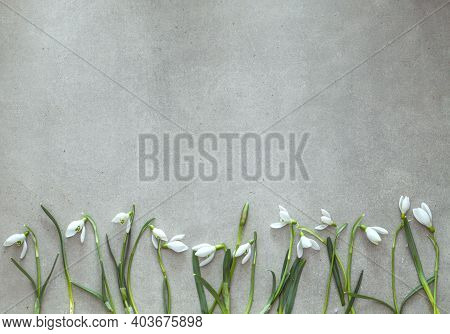 Spring Background  And Snowdrop Flowers. Easter Background. Overhead Flatlay Easter