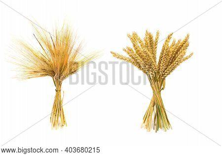 Sheaf Of Barley Ears And Sheaf Of Wheat Ear On A White Background