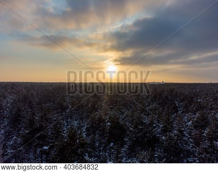 Winter Landscape. Snow-covered Pine Forest At Golden Hour At Sunset.