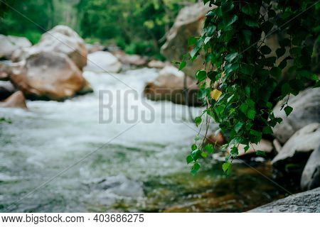 One Yellow Leaf Among Many Green Leaves Closeup On Bokeh Background Of Mountain Small River. Beautif