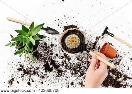 A Woman Transplants A Houseplant. Houseplant And Garden Tools On A White Background.