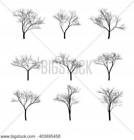 Set Of Silhouettes Of Dry Bare Trees. Isolated Objects, Vector Illustration