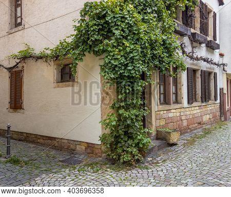 Vine Plant At A House Facade Seen In Neustadt An Der Weinstraße, A Town In The Rhineland-palatinate