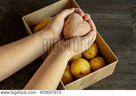 Female Hands Holding A Heart-shaped Ugly Vegetable Potato Over A Box Filled With Potatoes. Square, U
