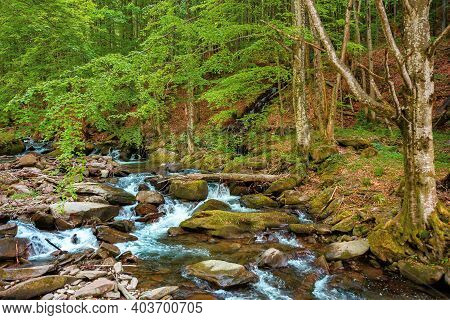 Mountain River Runs Through The Forest. Water Flow Among The Rocks. Trees In Fresh Green Foliage. Be
