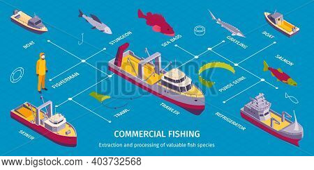 Isometric Commercial Fishing Infographics With Flowchart Of Isolated Boat Images Fish Trawl And Edit