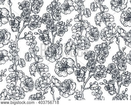 Black And White Vector Floral Seamless Pattern Of Sakura Flowers And Cherry Tree Branches