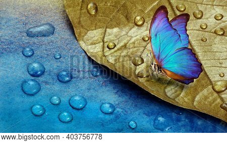 Golden Leaf In Water Drops. Butterfly On Dew Drops. Gold And Blue Background. Watercolor Paper Paint