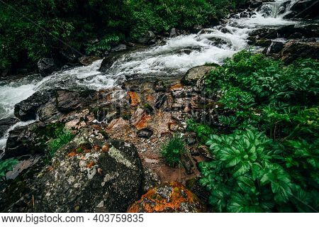 Atmospheric Green Forest Landscape With Mountain Creek. Beautiful Mystery Taiga With Wild River. Viv