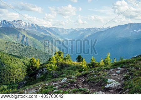 Beautiful Alpine Landscape With Small Conifer Trees On Rock On Background Of Giant Mountains And Gre