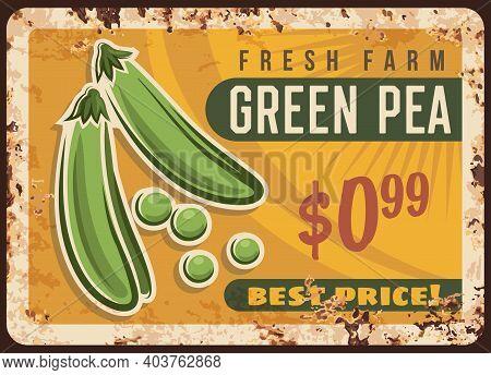 Pea Green Metal Plate Rusty, Vegetable Beans Poster Retro, Vector Vintage Farm Market Food Price Men