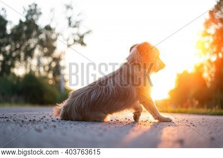 Lonely Abandoned Dog Against The Setting Sun.
